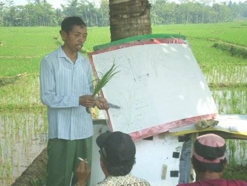 Saein asal Purbalingga yang menemukan varietas padi unggul yang diberi nama varietas padimutiara